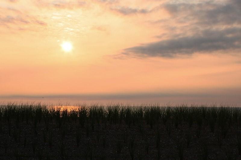 dune grass at sunrise