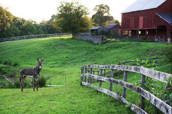 donkey on a rural farm