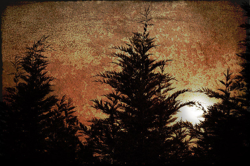 moon rising above cypress trees