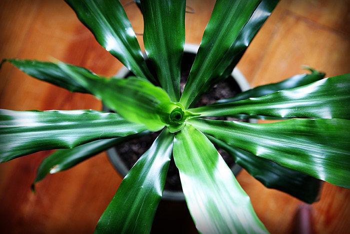 bird's eye view of plant