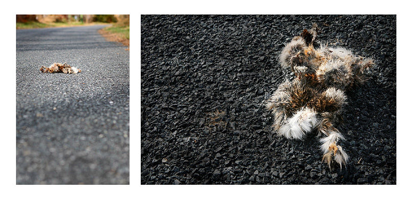 dead animal on road