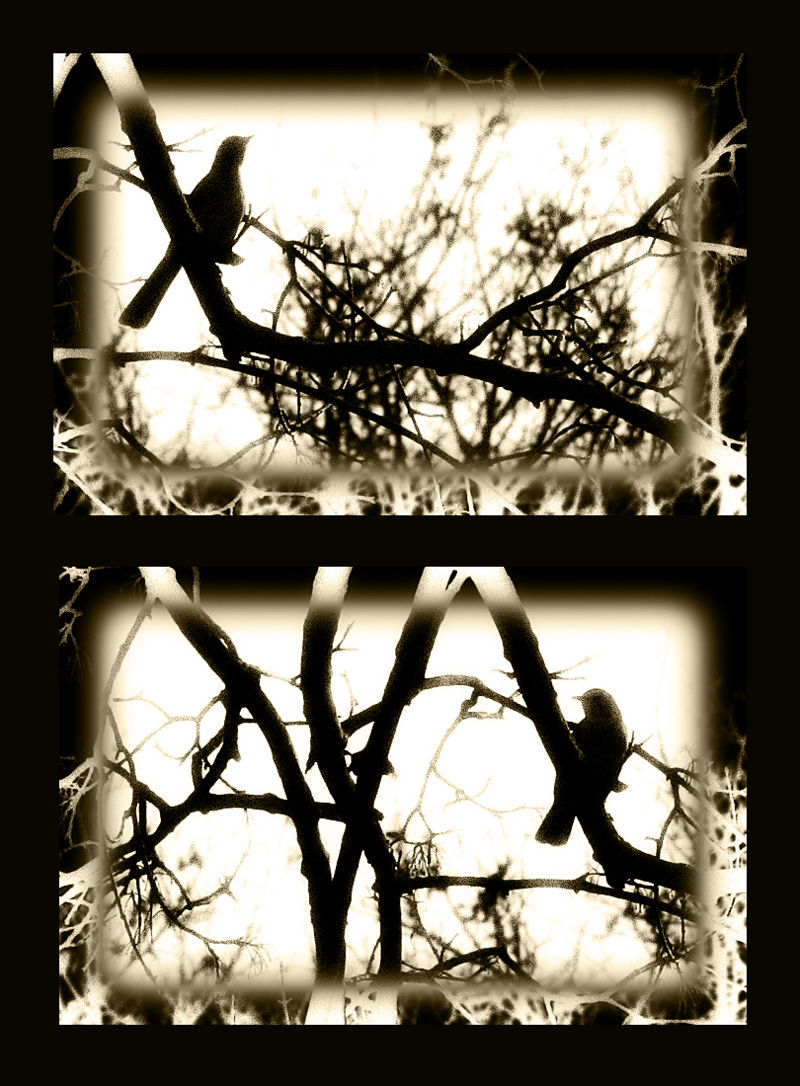sepia birds in a tree