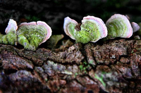 fungus on a tree