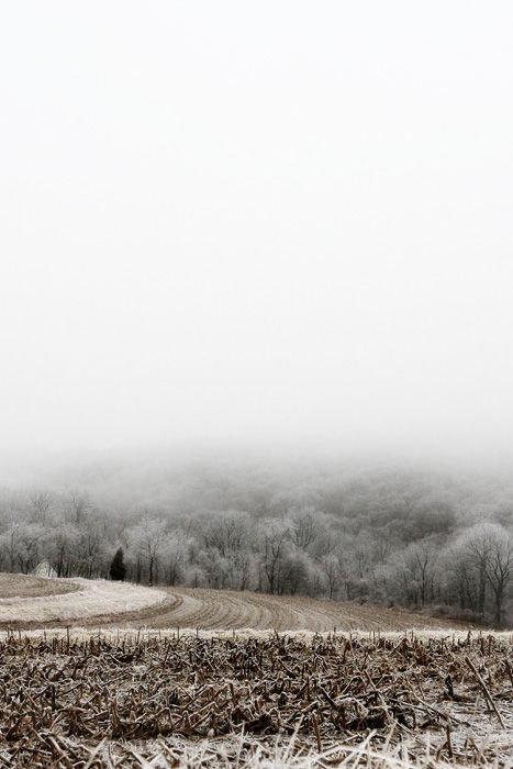 foggy icy cornfield
