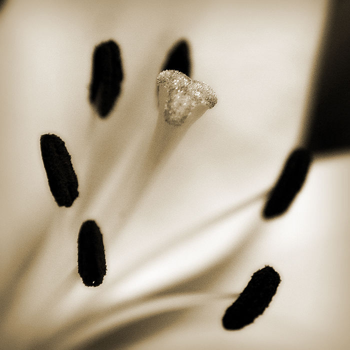 black and white macro of flower