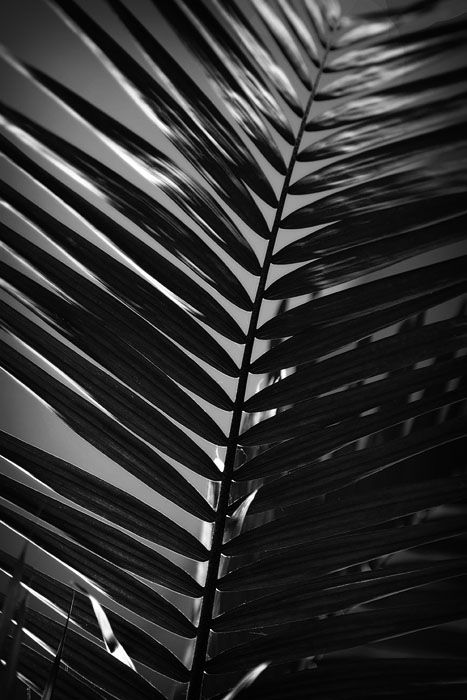 black and white shot of a fern