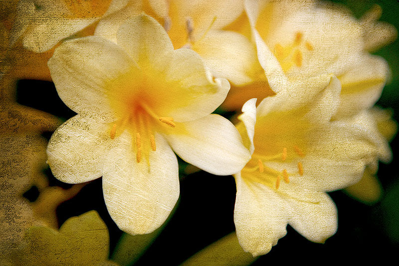 nine acres photography flowers yellow texture