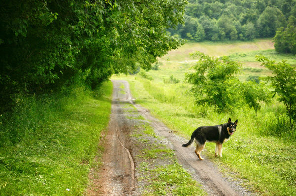 dog on a trail in the country