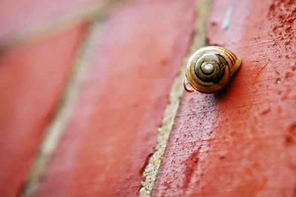 snail shell with dew drop