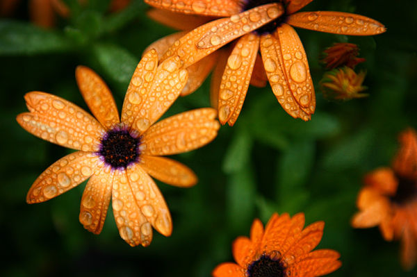 flowers with rain