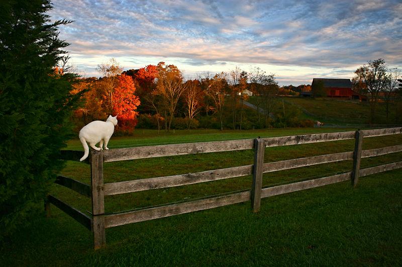 cat on fence on a farm at dawn