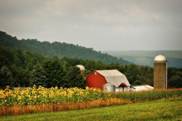 farm with sunflower field