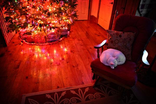 cat sleeping near a Christmas tree