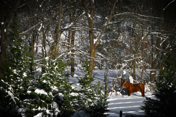 horse in 2 feet of snow