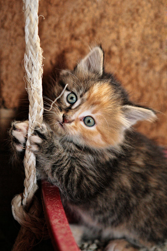 kitten hanging on rope