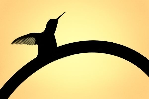 hummingbirddf