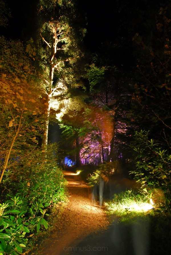 Forest Nightscene