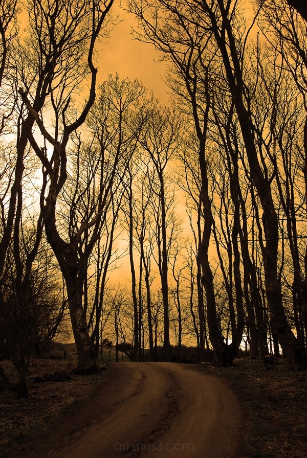 Cambo Forest Path,St. Andrews.