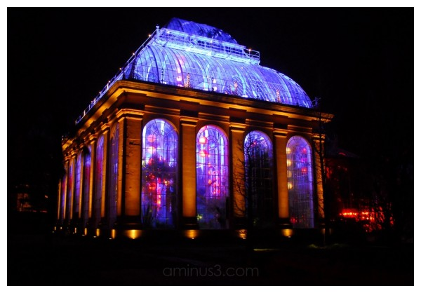 illuminated glasshouse, Edinburgh