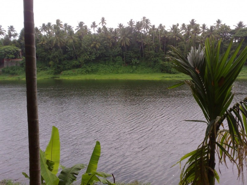 Backwaters in Kerala!