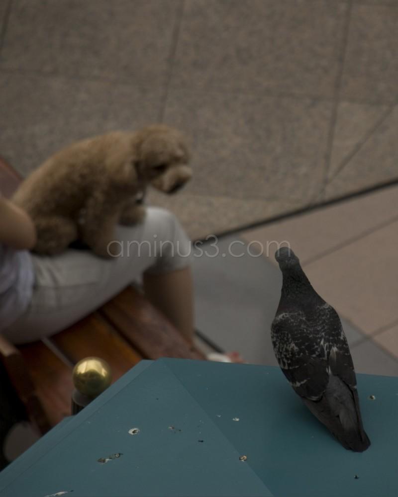 When a Dog Meets a Pigeon