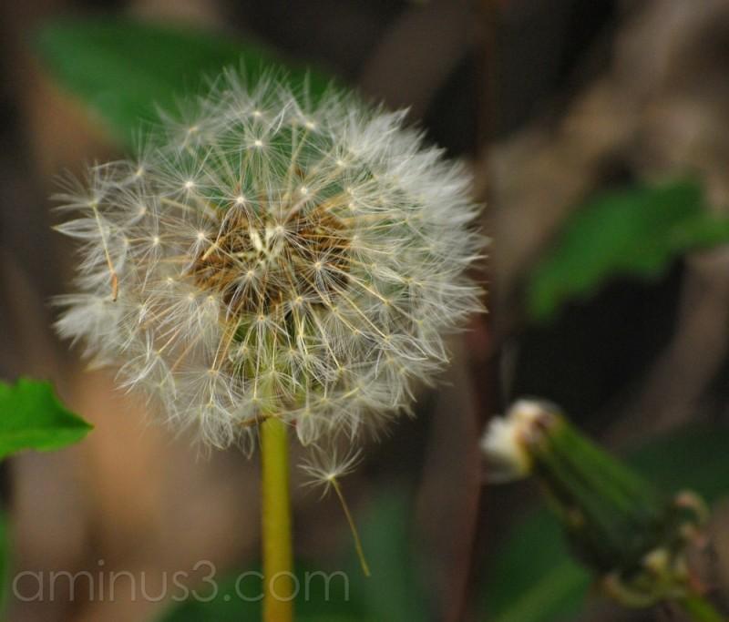 Spring Fuzzy