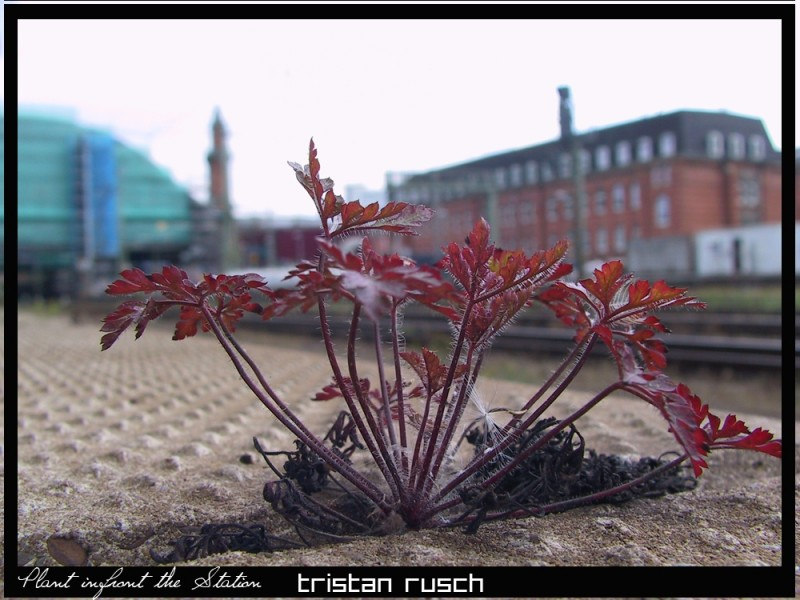 Plant infront of the Mainstation in Bremen