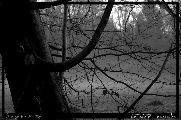 Black&white Nebel Fog tree Baum