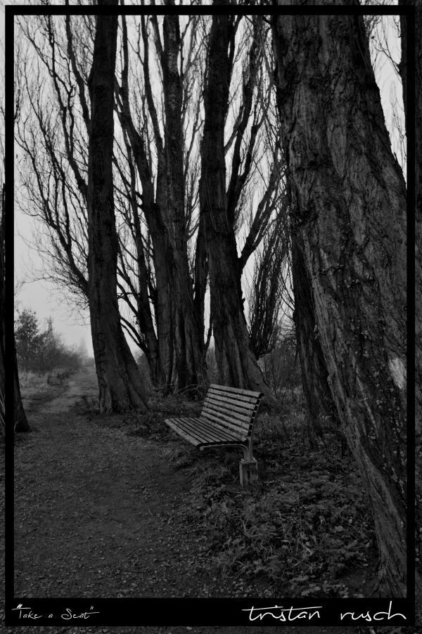 Bank Seat Tree Baum Bäume Nebel Fog