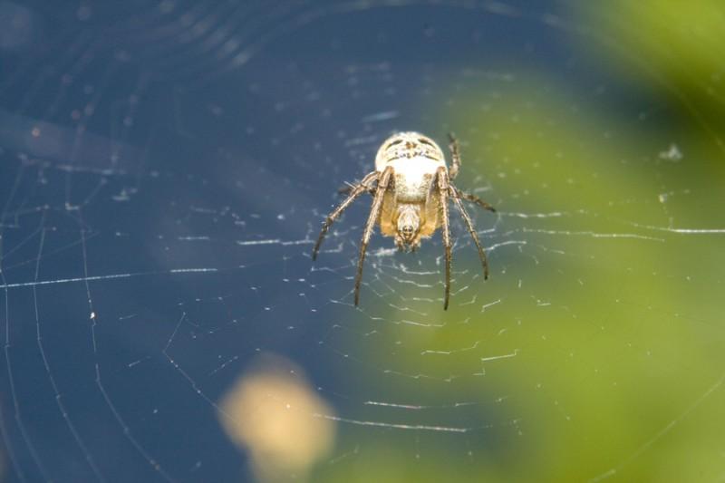 Spider(man)