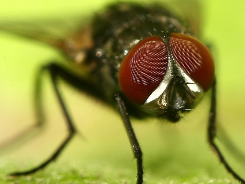 Mirada de mosca (II)