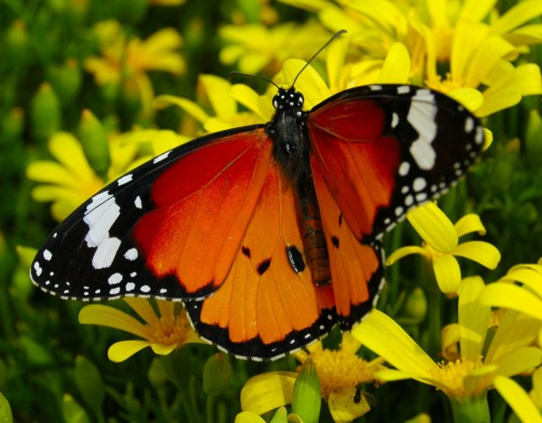 Time to Spread out!