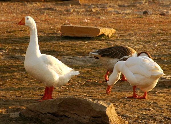 Jaisalmer Trip