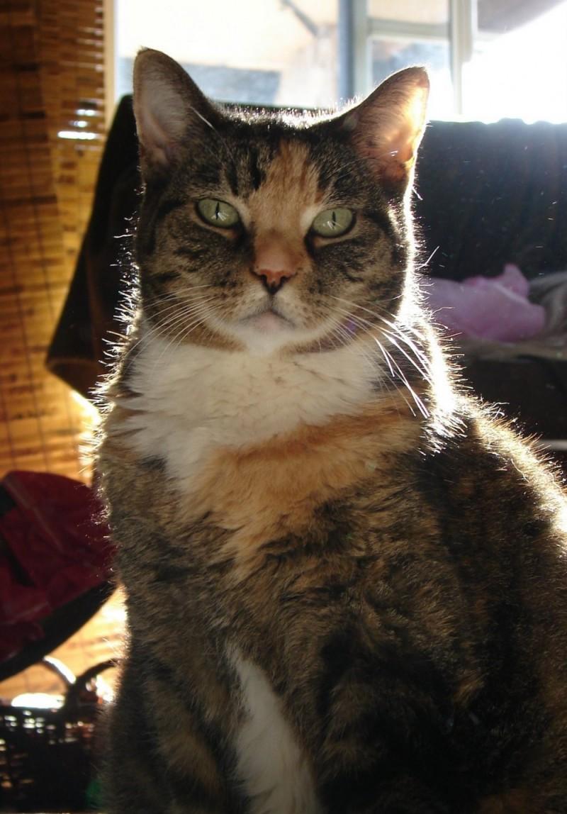My Ginger Cat