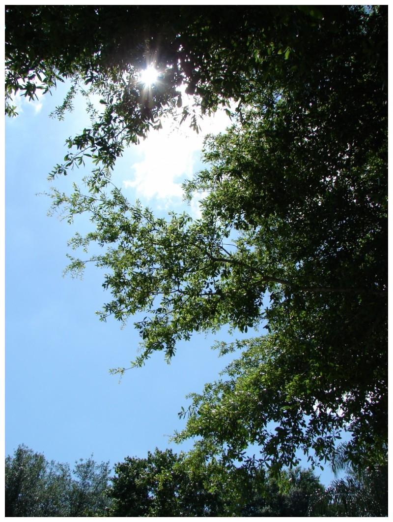 sun shining over the trees