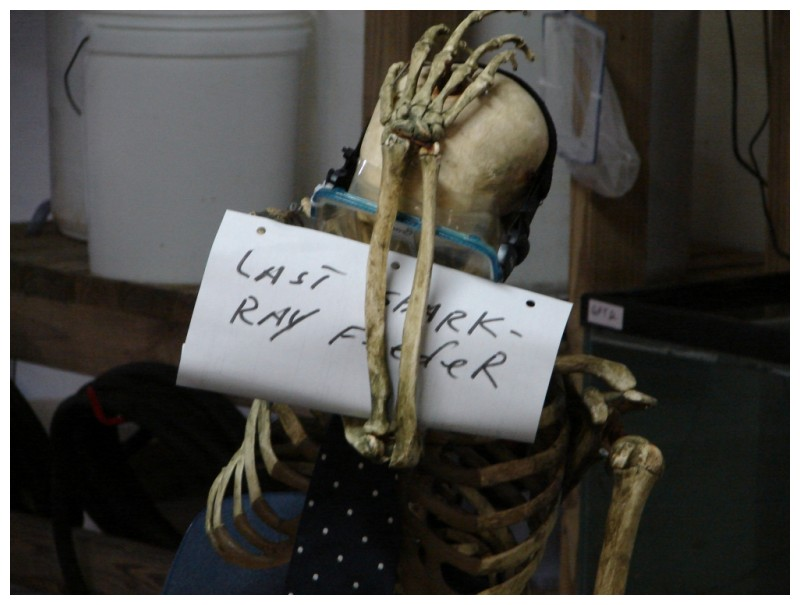 skeleton at the shark-ray tank