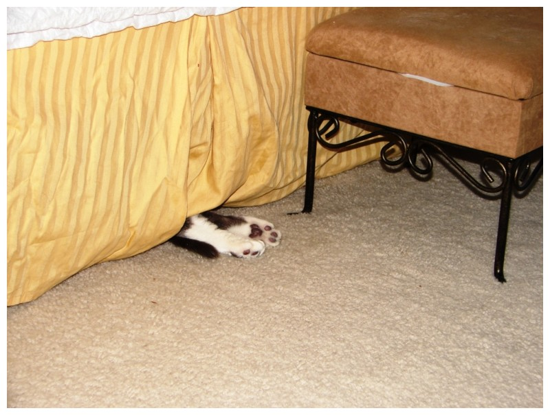Cat Feet under the bed