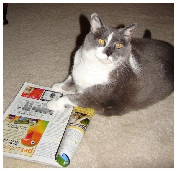 My cat Lovey reading up on Birds
