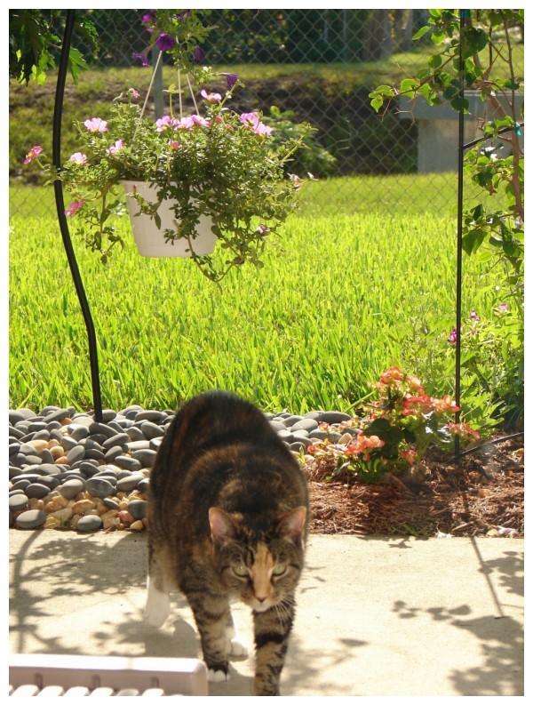ginger in your backyard garden,enjoying the plants
