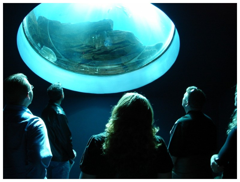 Group looking in a bubble at the georgia aquarium
