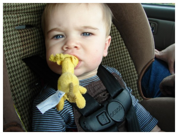 Auggie eating his giraffe in his carseat