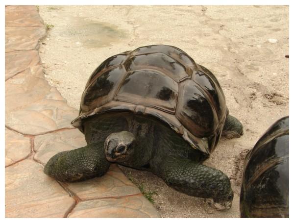 Turtle at Gatorland