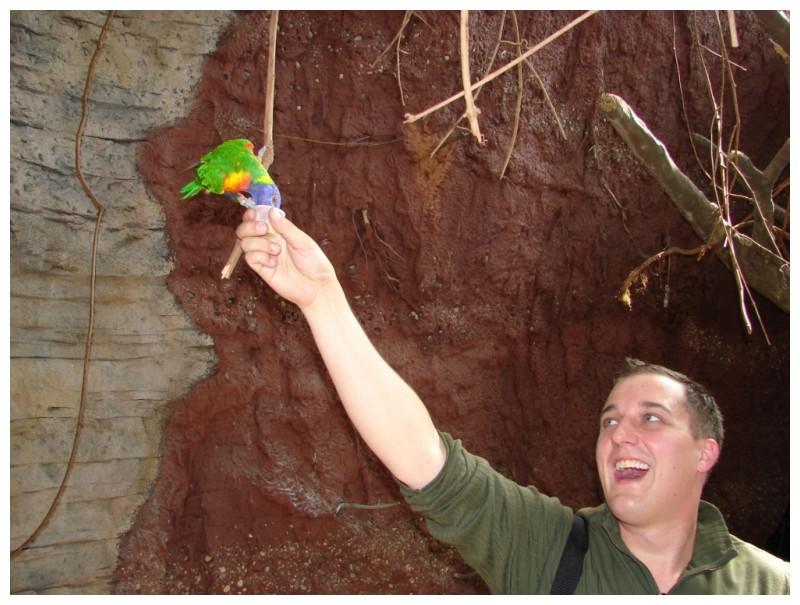 fedding a bird by hand