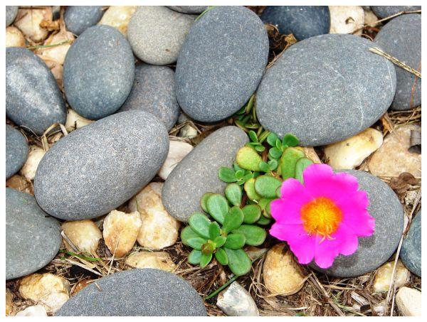 Flower growing in the rocks