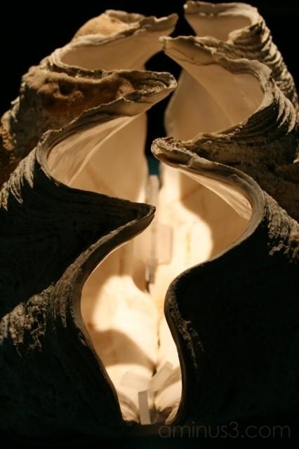giant shell spotlight