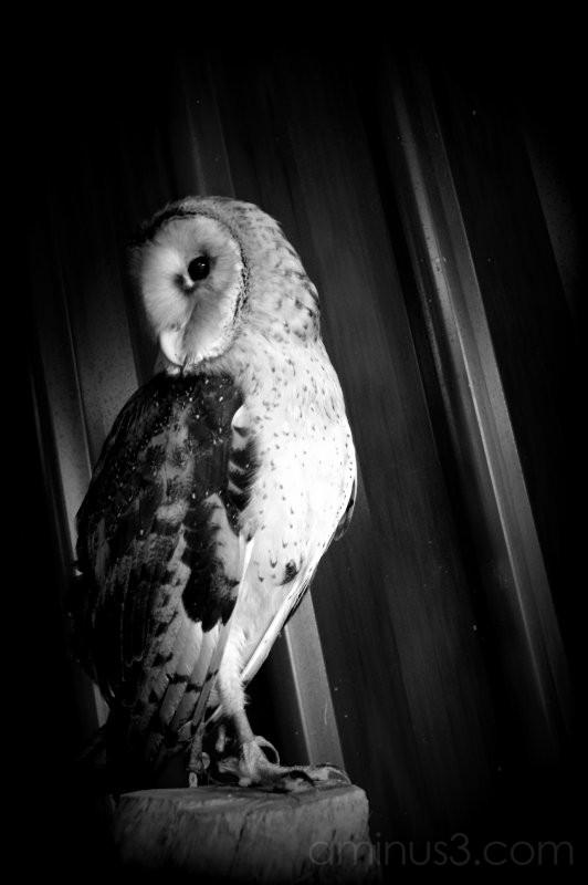 owl dark night ranch farm