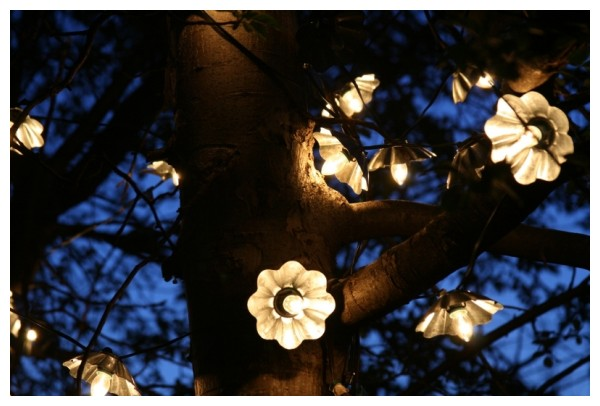 Lights in the Tree