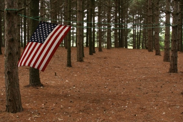 Flag in the Pine Trees