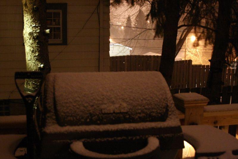 Winter in the Backyard