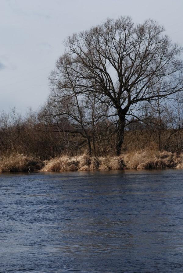 Narew River II